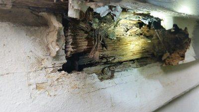 damage-found-in-Melbourne-termite-inspection