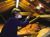 Timber pest inspection