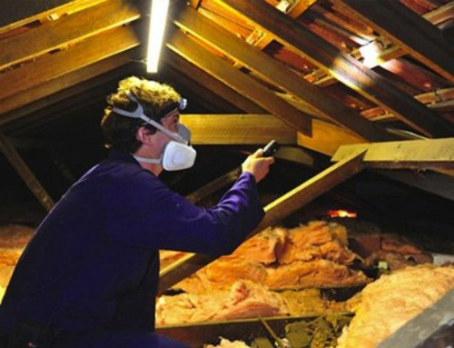 Who Organises a Building and Pest Inspection?