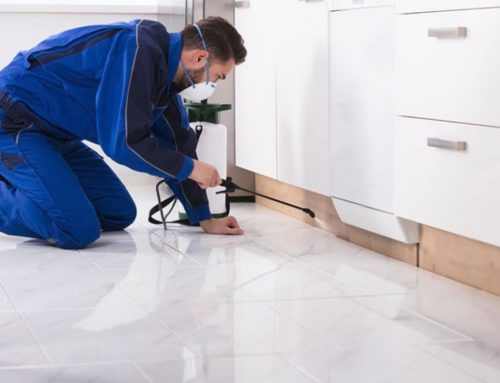 Why Get a Combined Building and Pest Inspection