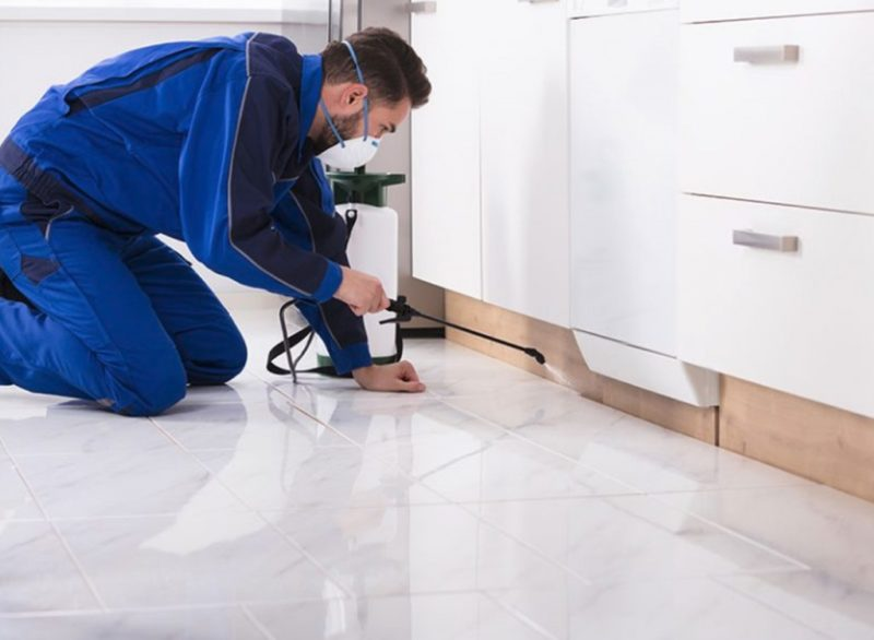 combined building and pest-inspection-